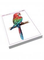 색연필로 과일그리기, 동물그리기 보태니컬 미술교재